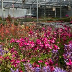 santa fe greenhouse
