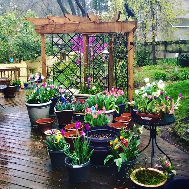 Fall bulbs planted in containers
