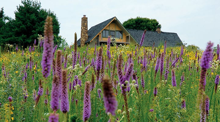 High Country Meadow Mix planted outside Cabin