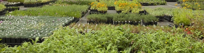 Plants Available In Flats