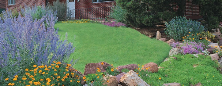 Enter to Win A Sustainable Lawn