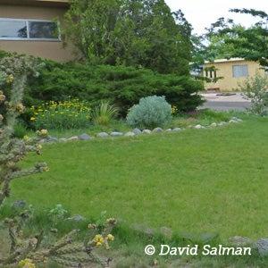 Summer Lawn Care - Blue Grama Grass lawn in Santa Fe, NM.