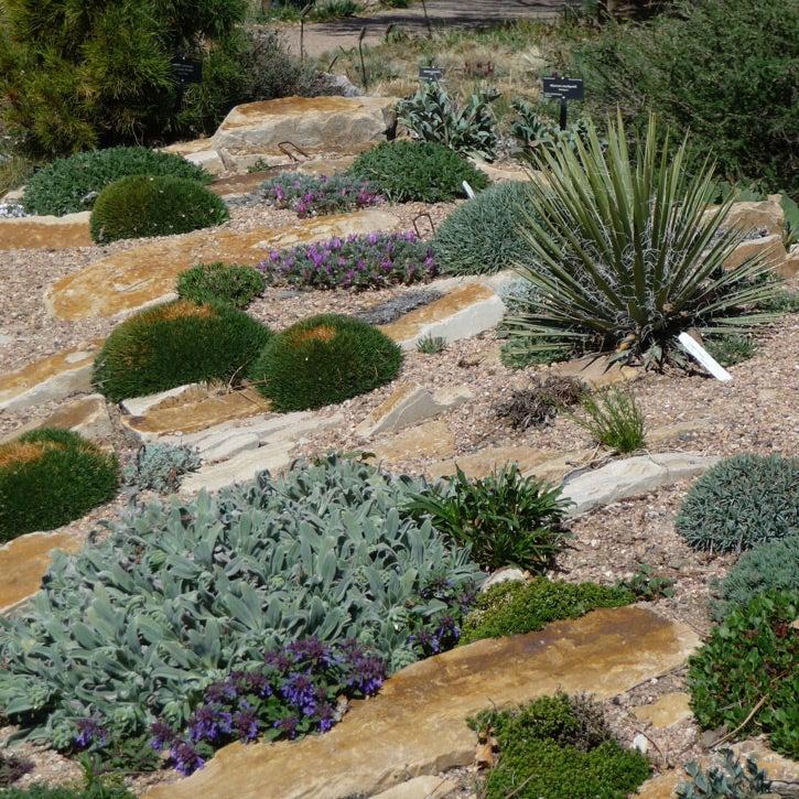 landscaping rocks durban durban landscaping top 5