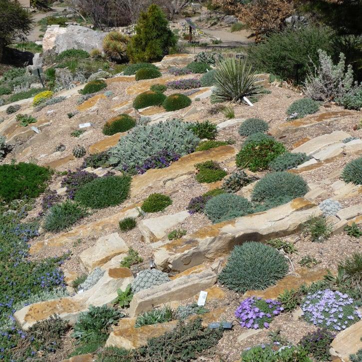 Denver Botanic Garden Crevice Rock Garden