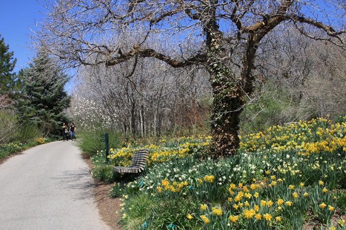 Red Butte Gardens.