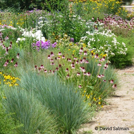 Chartield Arboretum's gardens are abuzz with pollinators.