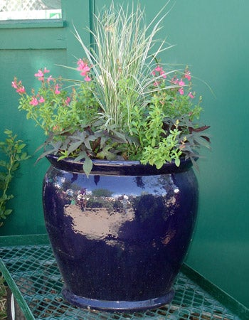 Planting perennials in bigger pots adds a dramatic element to your patio garden.