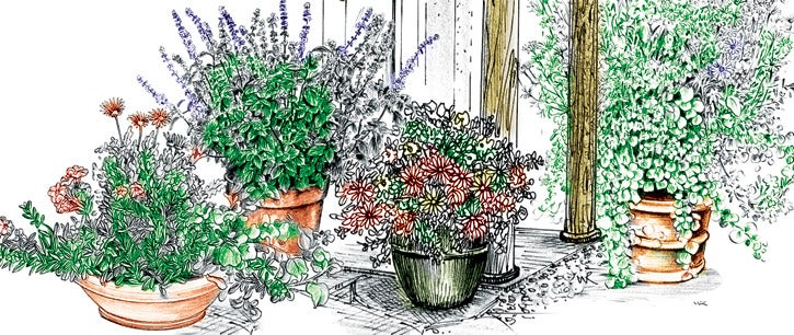 Perennial Containers Illustration