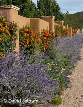 A mix of groundcovers, ornamental grasses, shrubs and flowering perennials.