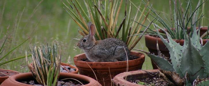 Rabbit Cactus Judy Christensen TX