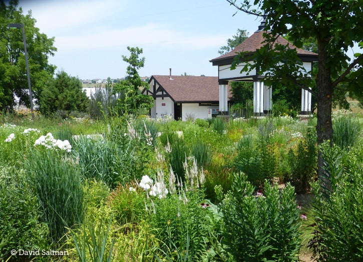 Mid Summer Beauty In The Intermountain West Gardening Tips And Know How