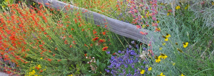 A collection of colorful native plants.