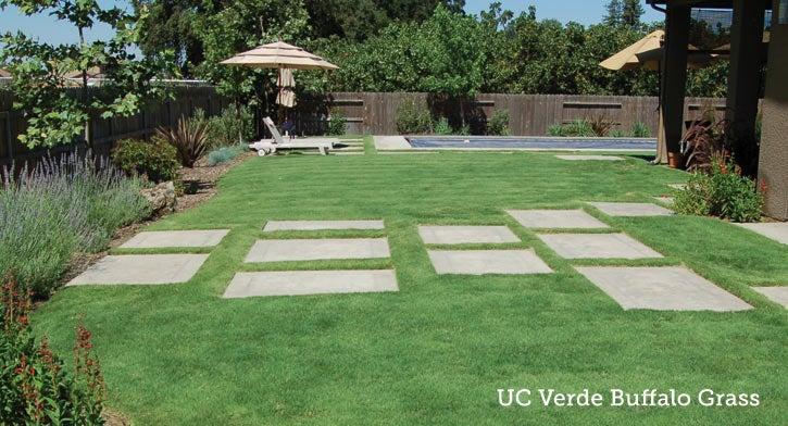 UC Verde Buffalo Grass Lawn Plugs