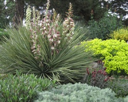 Kendrick Lake Gardens in Lakewood, CO has a host of native plants, including: Yucca glauca, Eriogonum umbellatum, Echinocereus triglochidiatus, Artemisia 'Seafoam'and Oenothera