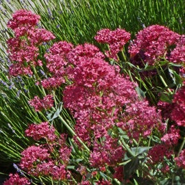 Easy To Grow Perennials For Beginner Gardeners The High