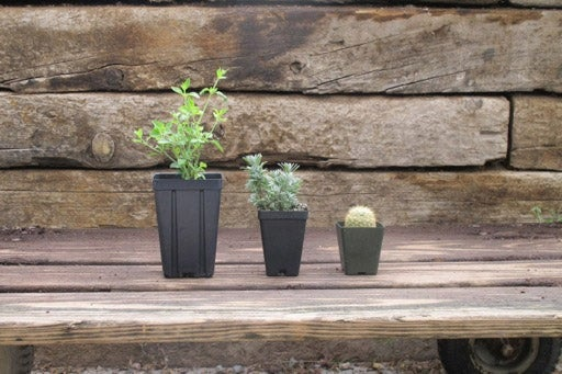 Example of our Plant Pot Size