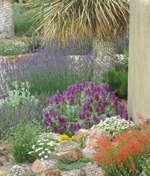 Pay attention to the micro-climates around your home when selecting plants.