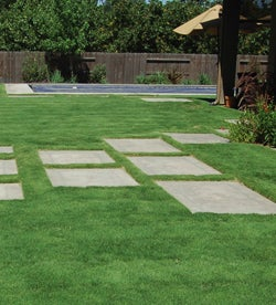 Use a native grass, such as Buffalo grass, as a great drought-tolerant alternative to Kentucky Blue Grass.