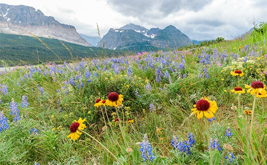Intermountain Native Wildflower Seed Mix