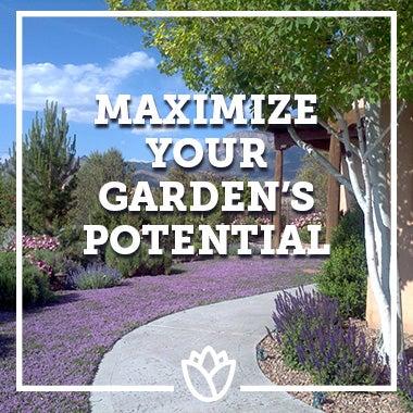 """""""Maximize Your Garden's Potential"""" thyme lawn garden"""