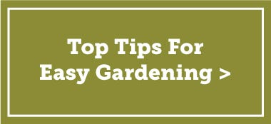 top tips for easy gardening