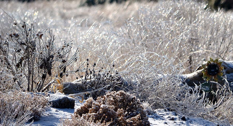 Winter Watering For Your Garden | High Country Gardens