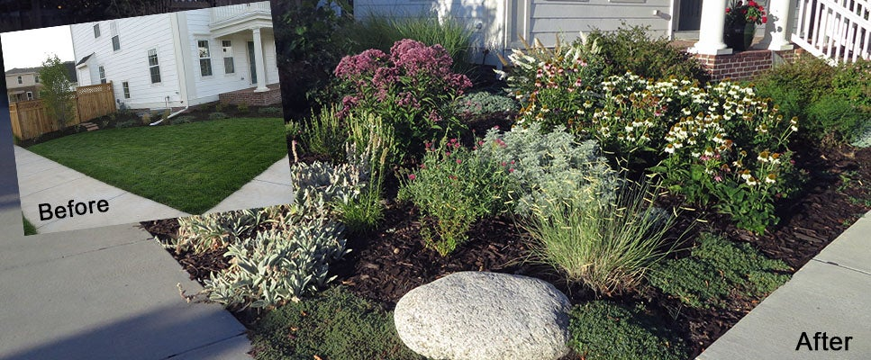 Why I Killed My Front Lawn High Country Gardens Blog