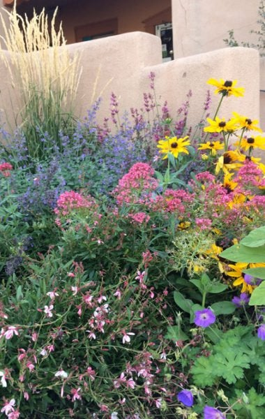 Karl Foerster Grass, Nepeta (Catmint), Centranthus ruber coccineus (Jupiter's Beard), Gaura (Apple Blossom Grass) and Black-Eyed Susan (Rudbeckia)