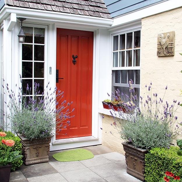 lavender container garden