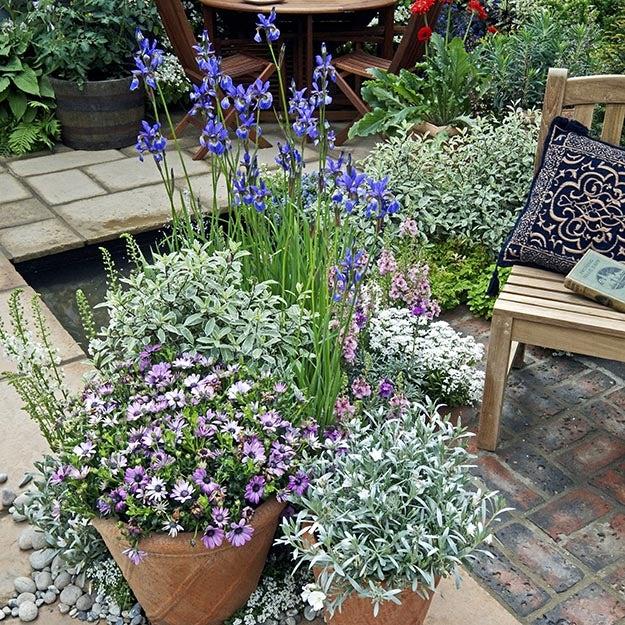 Perennial container-garden with Artemisia, Siberian Iris, Lavender and Anemone.