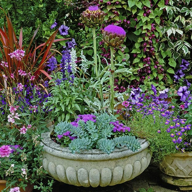 Perennial container garden with spurge, salvia and an artichoke in bloom.