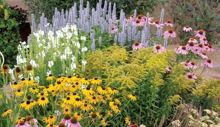 Perennial Garden in bloom