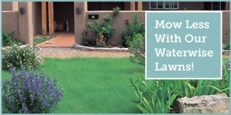 Mow Less With Our Sustainable Lawns