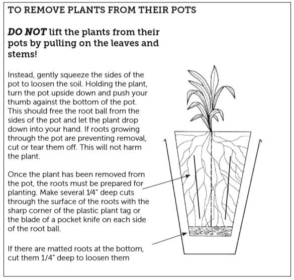 How To Remove Plants From Pot