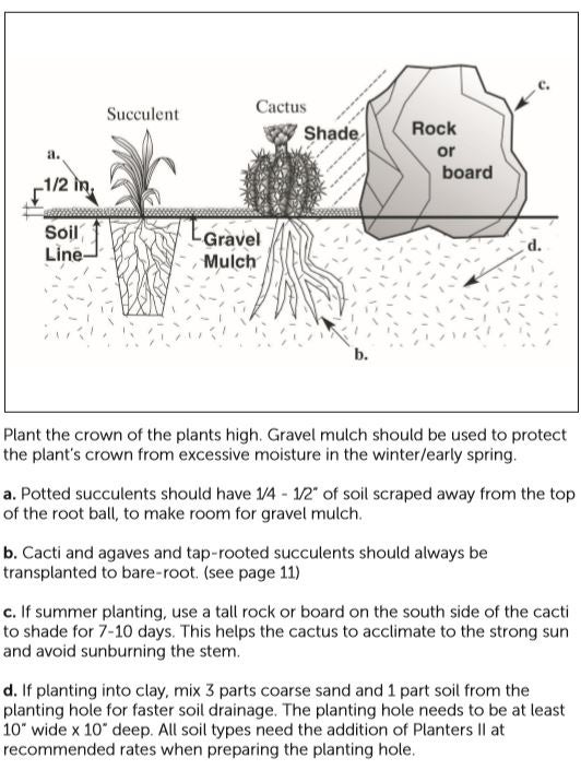 Succulent Planting Guide