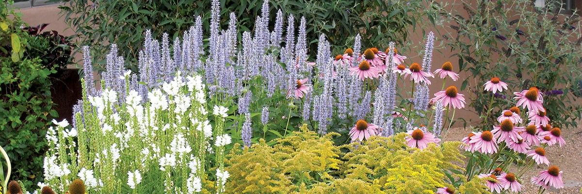 Summer Dreams Pre-Planned Garden: Good preparation in spring leads to beautiful summer displays!