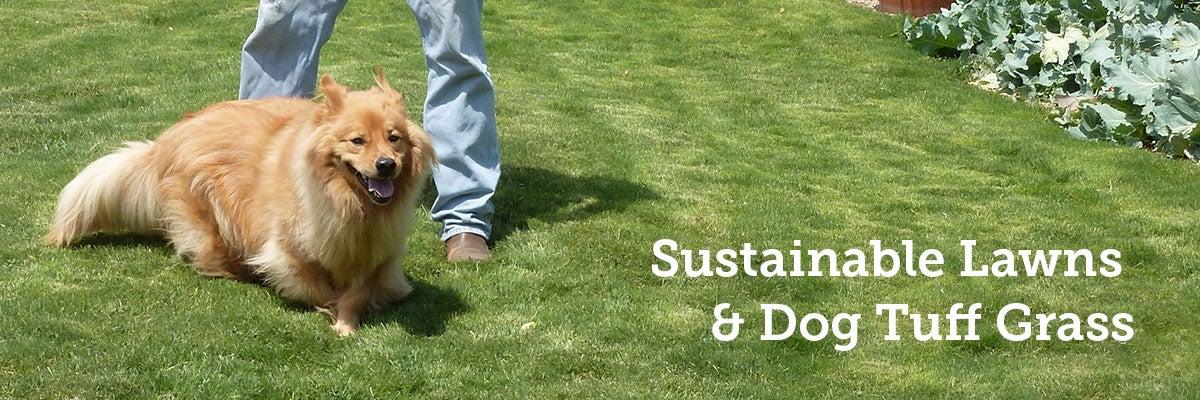 Dog Tuff Plug-Planted Grass Lawn